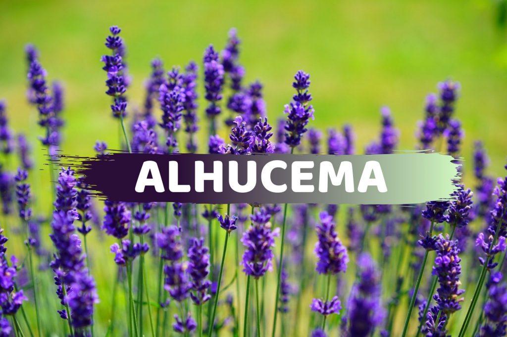 Alhucema