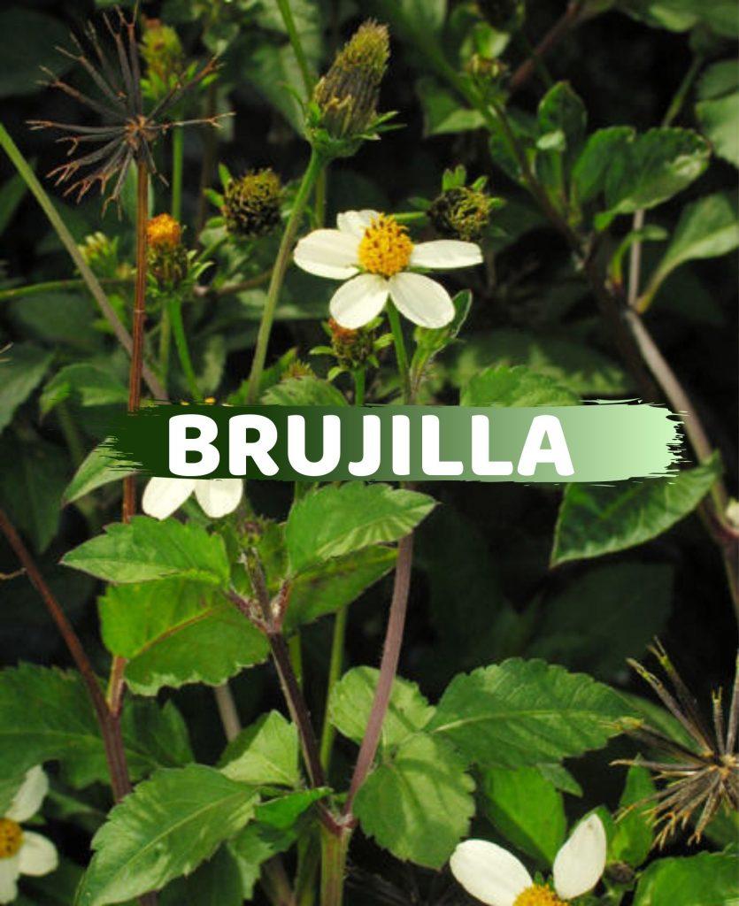 Brujilla